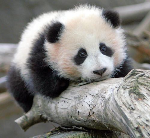 Sad Panda is Sad.